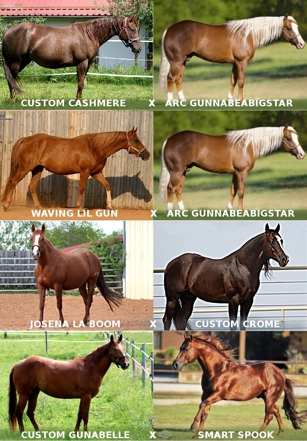 4 expected foals 2020